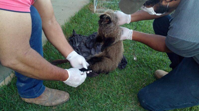Macaco em risco de extinção é resgatado por polícia ambiental