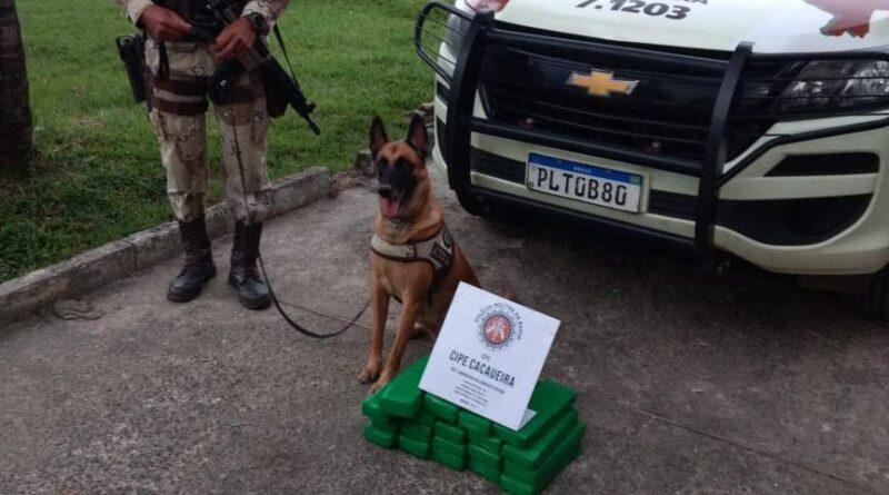 Cadela Atena da Cipe Cacaueira encontra 23 kg de maconha