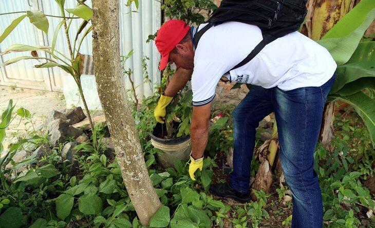 Salvador intensifica combate ao Aedes aegypti com ações especiais
