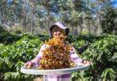Agricultura familiar baiana comemora Dia Mundial do Café com inovações, qualidade do produto e renda para o agricultor