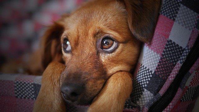 Cães e gatos podem ser adotados em Salvador neste sábado (16/10)