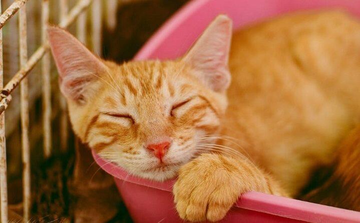 Salvador terá evento para adoção de gatos, neste sábado, na Mouraria
